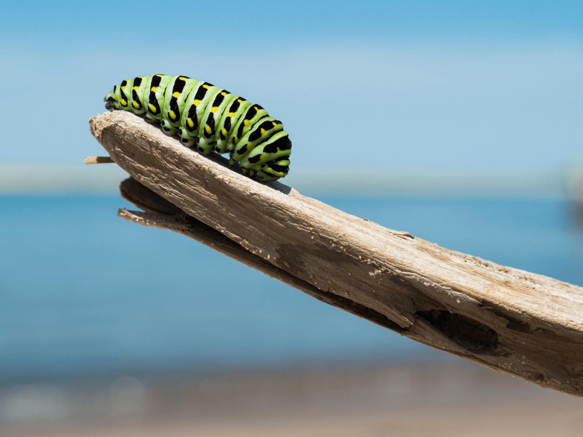 Prestaties managen bij implementaties | Cursus verandermanagement